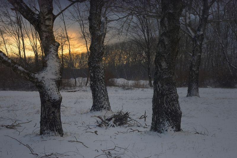 зима утро Хмурый рассветphoto preview