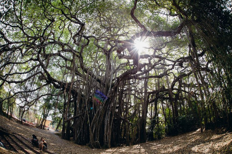 landscape temple India architecture tree Banian Treephoto preview