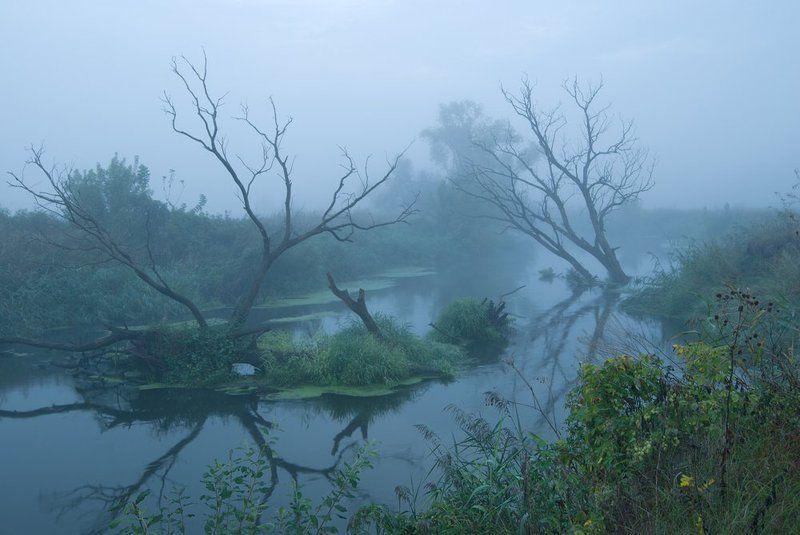 осень, туман, деревья , речка. в гостях у Лешегоphoto preview