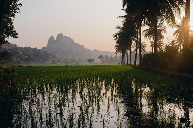 landscape ricefield India palms mountains rice Hampe Rice Fieldphoto preview