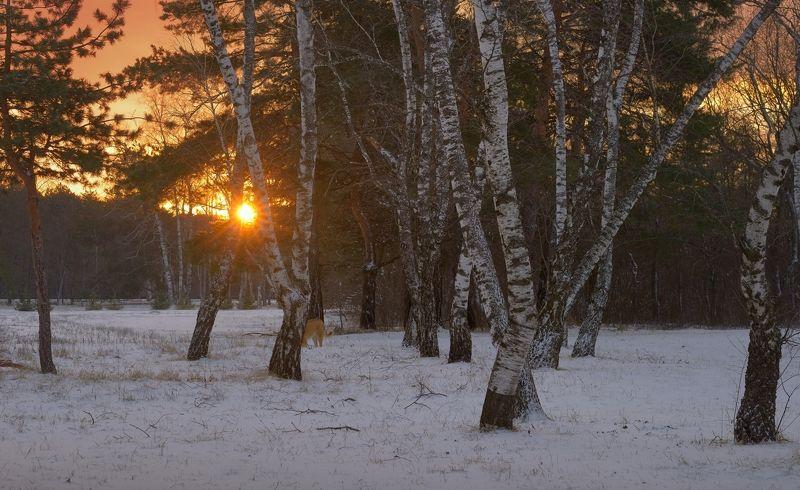зима, снег, утро Зимаphoto preview