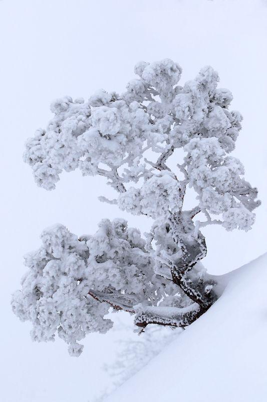зима,горы,вершины,пейзаж,небо,деревья,дагестан,природа Зимний этюд..photo preview