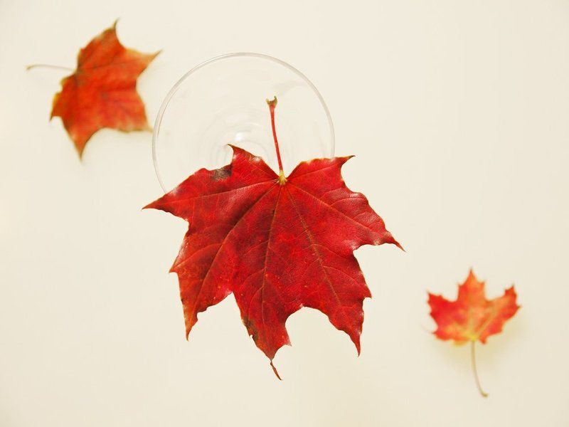 листья кружатся и падаютphoto preview