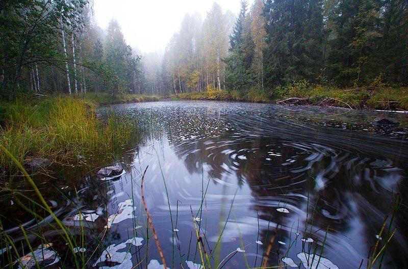 карелия, природа, россия, лес, река, осень, вода, поток, водоворот, струя, russian, karelia, nature, autumn, forest, river, water, flow, swirl, jet Круговорот воды в природеphoto preview