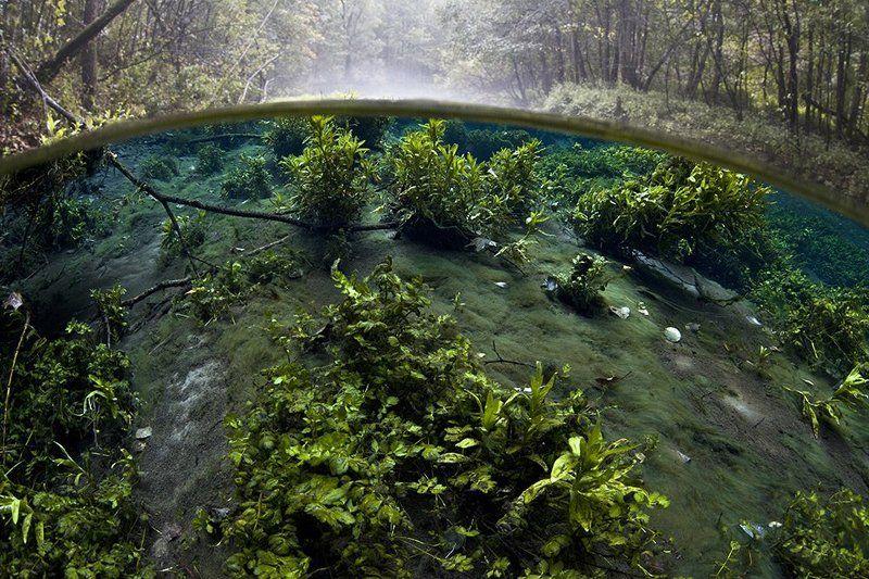 Подводный огородphoto preview