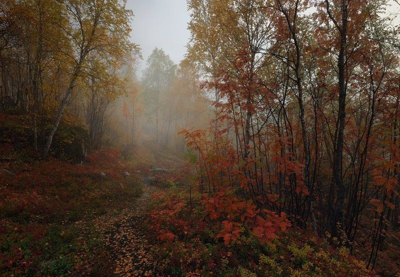 Тропинка в осеньphoto preview