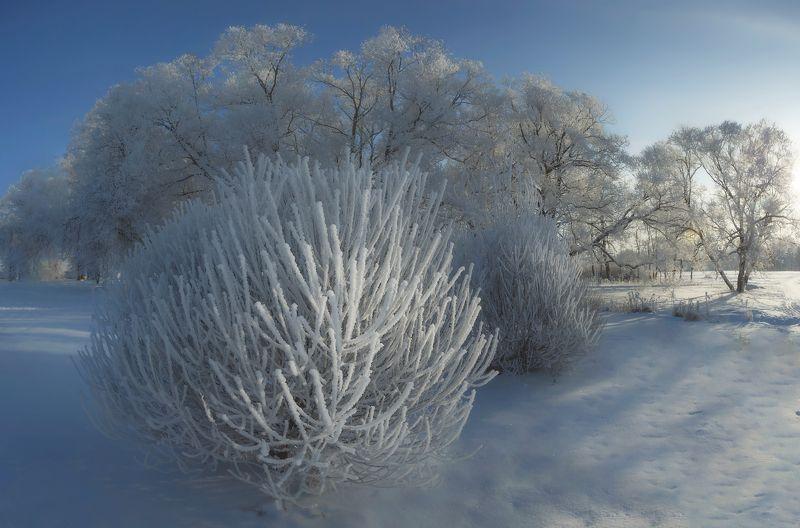 питер, зима, царскоесело, царское, нижнийпарк В Питере зима)photo preview