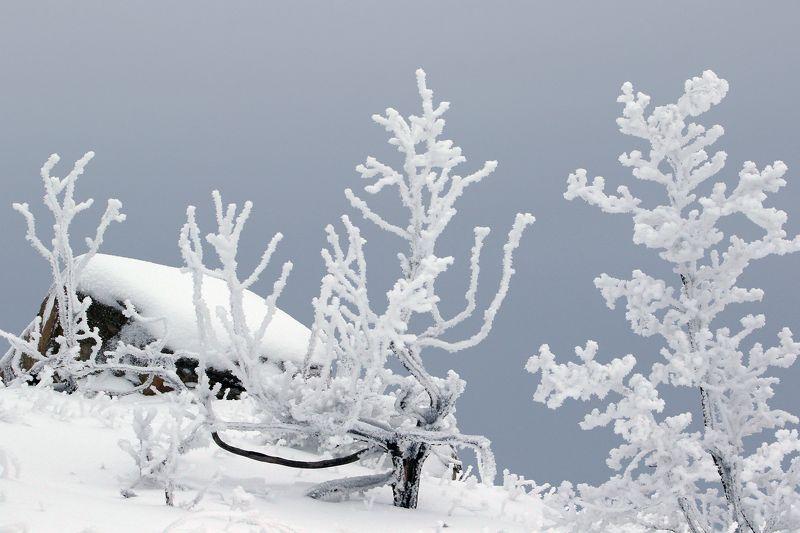 зима,горы,вечер,снег,пейзаж,природа,дагестан..и Зимний этюд..photo preview