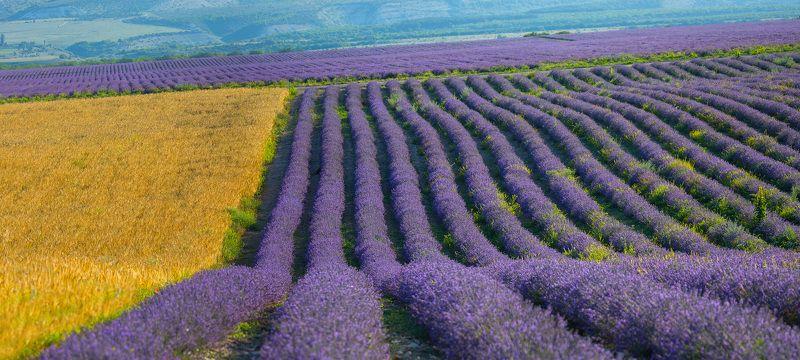 крымский прованс, крым, бахчисарай, лаванда, лето, цветы, панорама, пшеница, тургеневка photo preview
