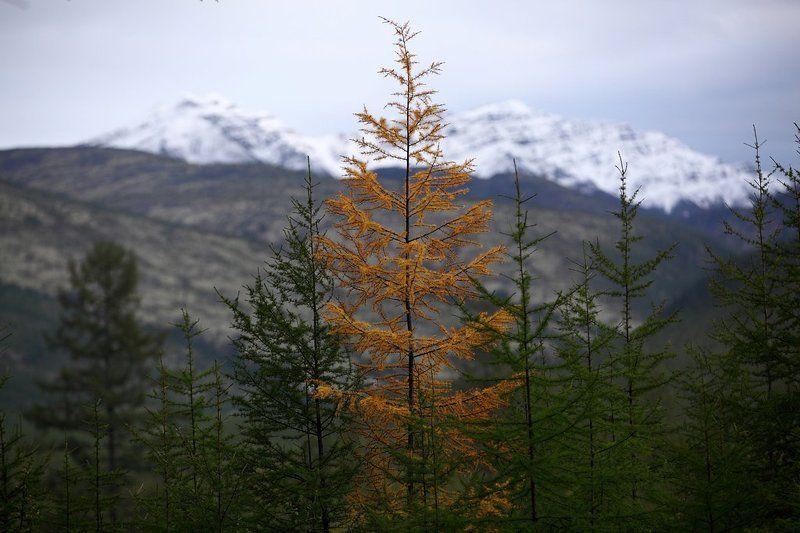 якутия, осень, про Осень в Якутииphoto preview