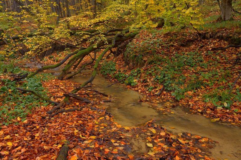 осень листва утро лес ручей Прошедшая осеньphoto preview