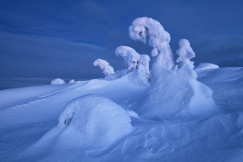 Голубые лебеди...