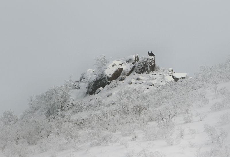 зима,грифы,горы,вечер,снег,пейзаж,природа,дагестан.. Зимний пейзаж..photo preview