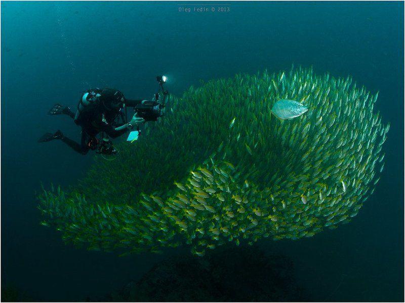 Diving, Kho Phangan, Sail Rock, Thailand Sail Rockphoto preview