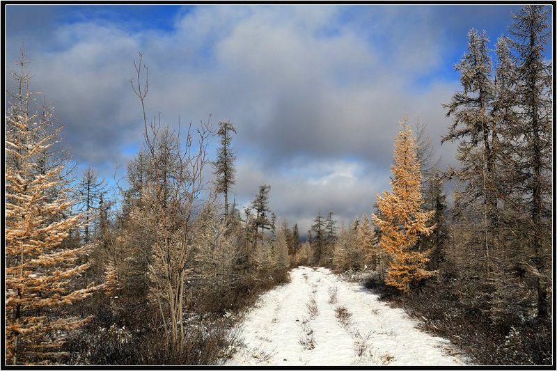 Вот и зимаphoto preview