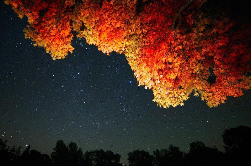 ночная осеньphoto preview