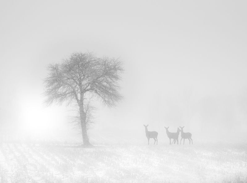in a winter climate...photo preview
