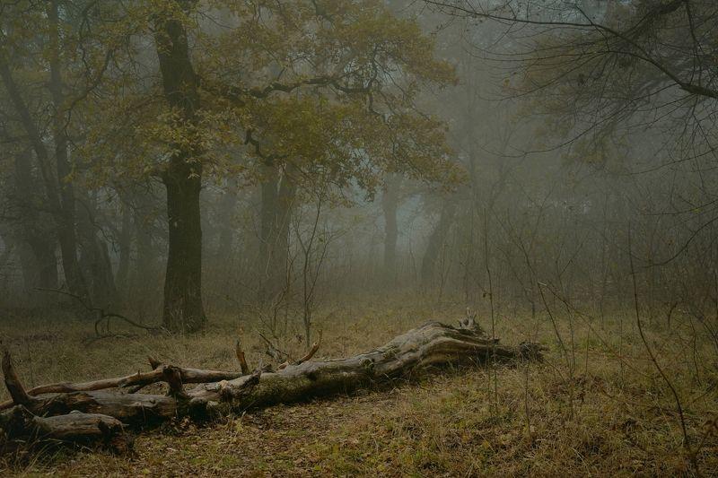 осень листва утро лес туман Дубовая рощаphoto preview