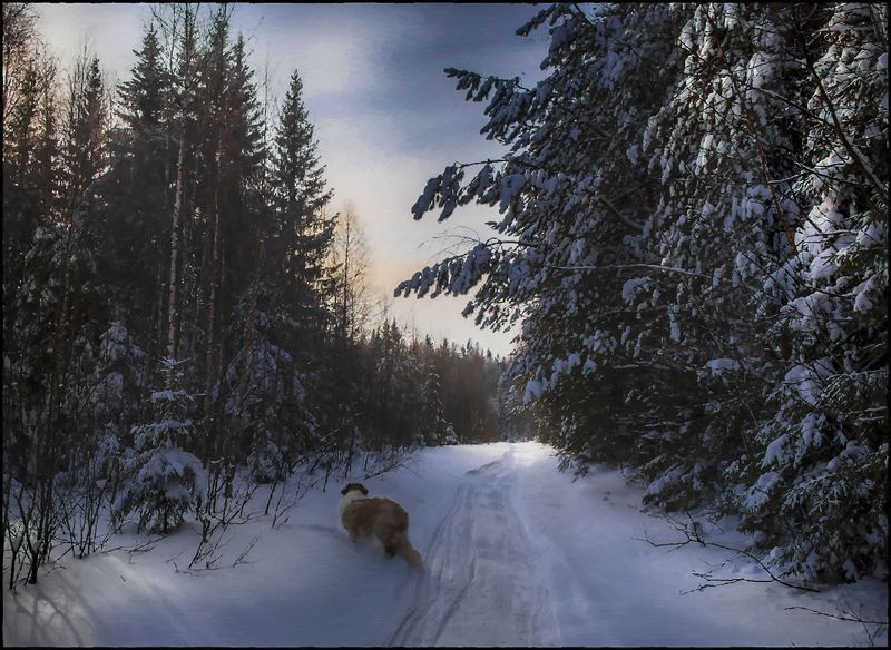 По лесным дорожкам.photo preview