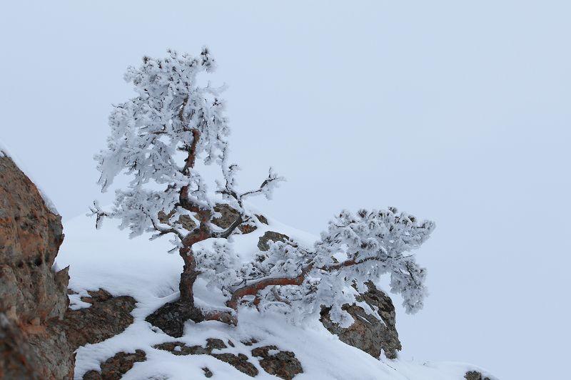 зима,горы,вечер,снег,пейзаж,природа,дагестан.. Зимний этюд..photo preview