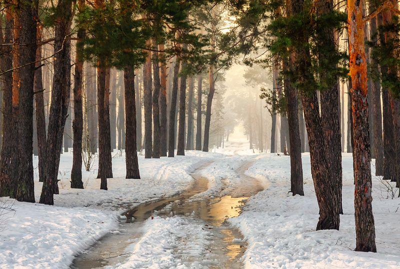 landscape, пейзаж, утро, лес,  деревья, солнечный свет,  солнце, природа, весна, снег, весна пришлаphoto preview