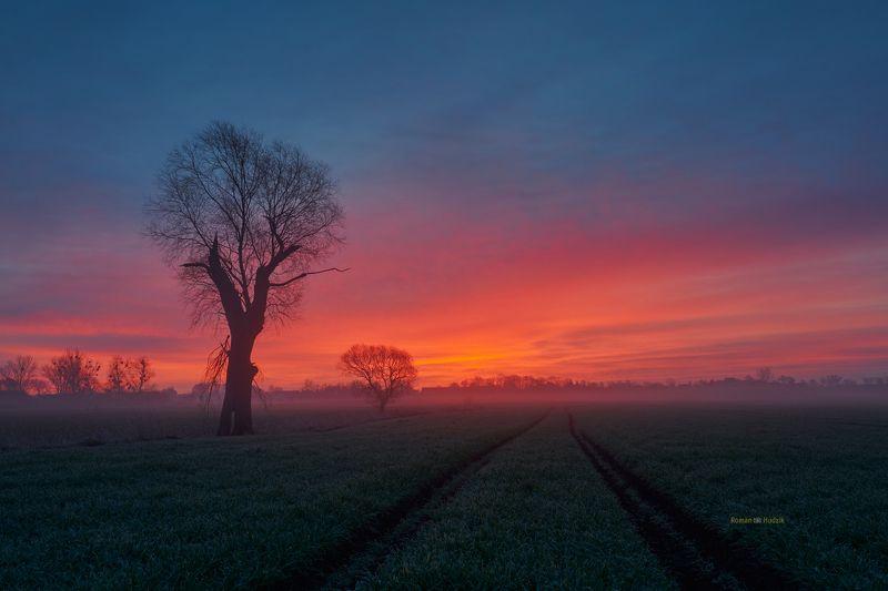 Kociewie fields, landscape, Poland, field, sunrise, fog, tree, Kociewie fieldsphoto preview