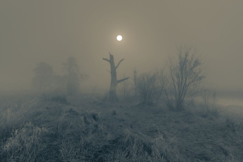 winter, whispers, light, river, frost, nikon, nature, gwda, landscape, fog, tree, atmosphere The Whispering Treephoto preview
