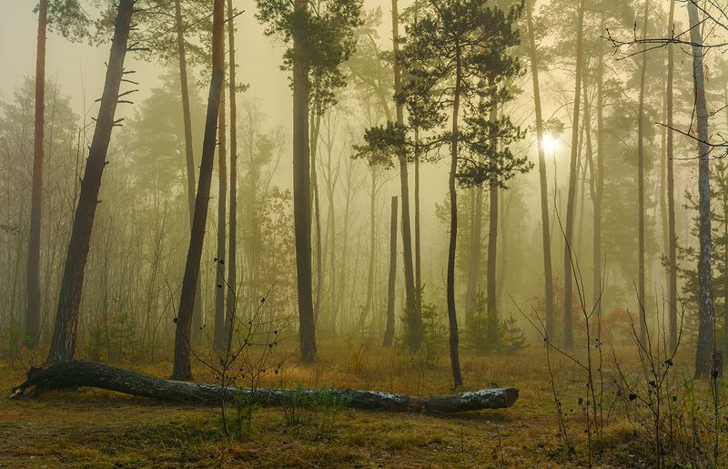 landscape, пейзаж, утро, лес,  деревья, туман, рассвет, туман как то утром на рассветеphoto preview