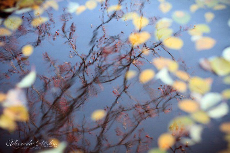 осень, листья, отражение, вода, небо, дерево Последнее отражение осени...photo preview