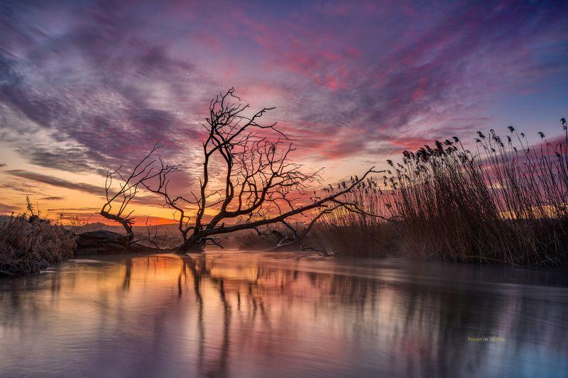 Wierzyca River, Kociewie, Poland, landscape, sunrise, clouds, sky, tree Wierzyca Riverphoto preview
