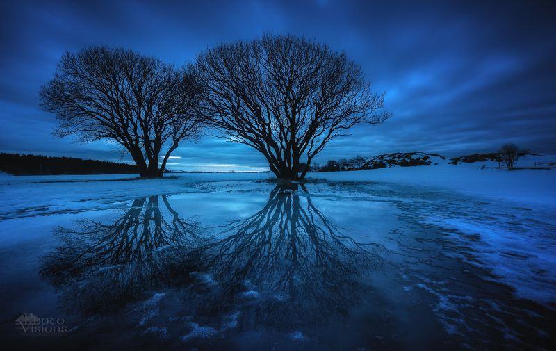 trees,night,norway,tree,blue hour,evening, The Gate IIIphoto preview