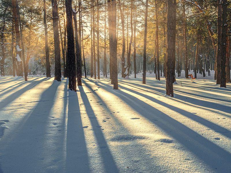 landscape, пейзаж, утро, лес,  деревья, солнечный свет,  солнце, природа, снег, зима солнечное утроphoto preview