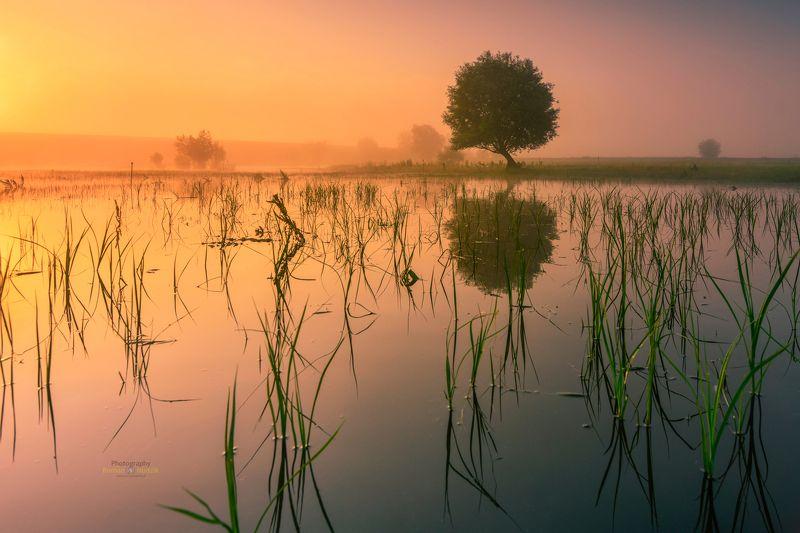 kociewie, poland, landscape, sunrise, water, pond, tree photo preview