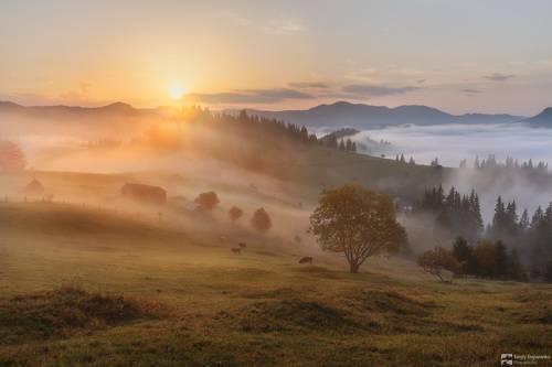 Деревенское утро