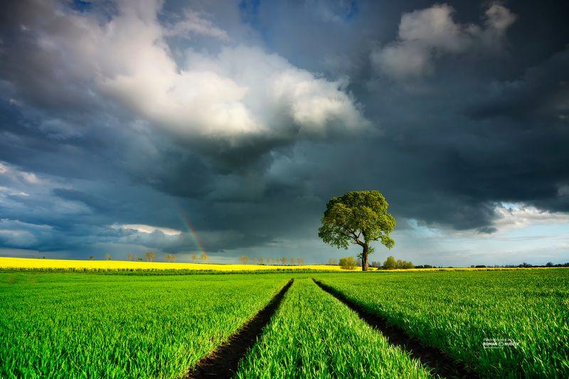 Field landscape, Kociewie, Poland, tree, landscape, clouds, rainbow, spring Field landscapephoto preview