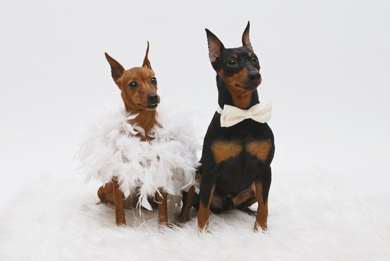 фотосессия, собак свадьбаphoto preview