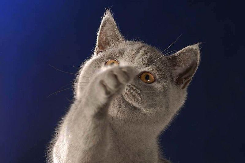 кошка Дай-ка объектив протру!photo preview