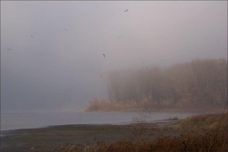 река, утро,туман, птицы Утроphoto preview