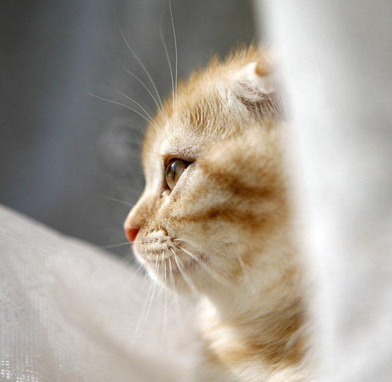 кот, фотя ***photo preview