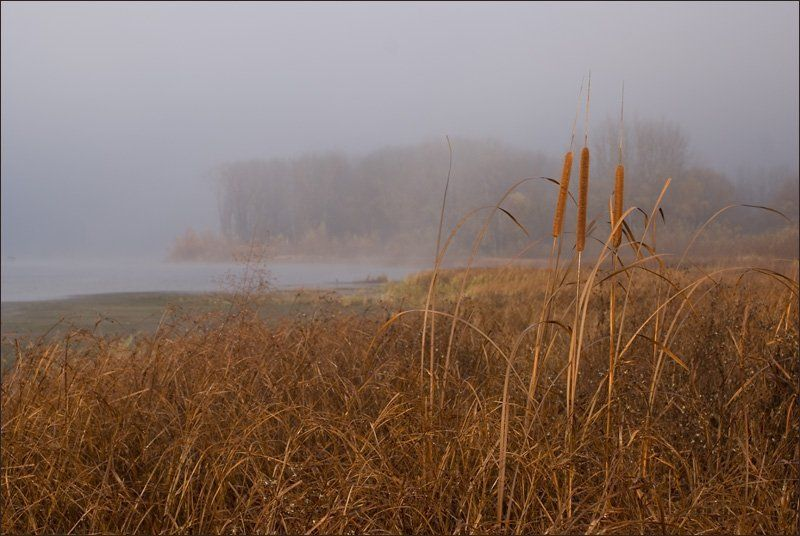 река, утро,туман, Утро на рекеphoto preview