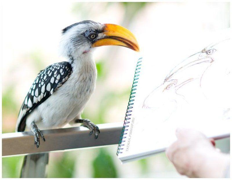птица, рисунок портретphoto preview