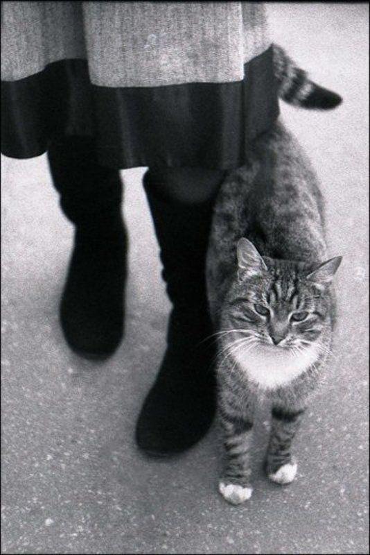 ч/б, кот, москва котяраphoto preview