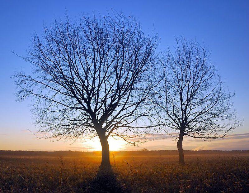 дерево, утро, туман, солнце, рассвет, ильдар, гилязов ***photo preview