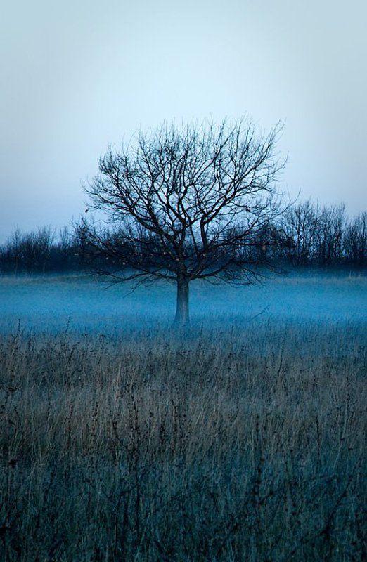 туман, дерево, утро, холод, ильдар, гилязов ***photo preview