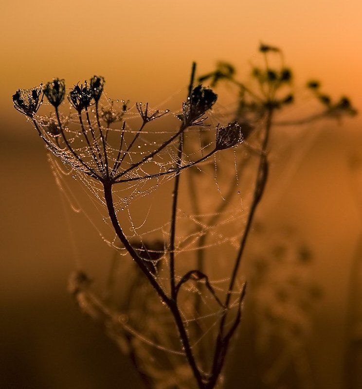 паутина, роса, утро, куст, ильдар, гилязов ***photo preview