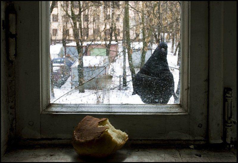 голубь, юмор, абаджян Хлеб и голубь.photo preview