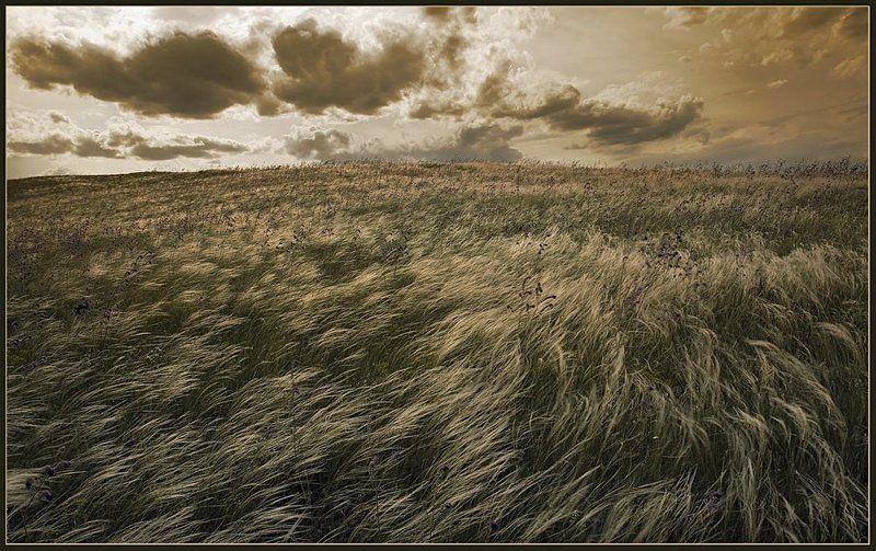 пейзаж, небо, степь, ковыль, ветер, свобода, lad_i_mir Свободаphoto preview