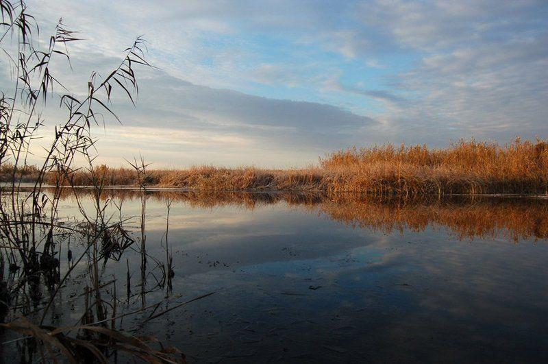 дельта, вода, камыш, лед Легкое прикосновение зимыphoto preview