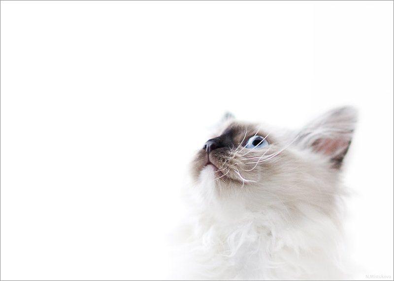кот, белое, ожидание чеширский котphoto preview