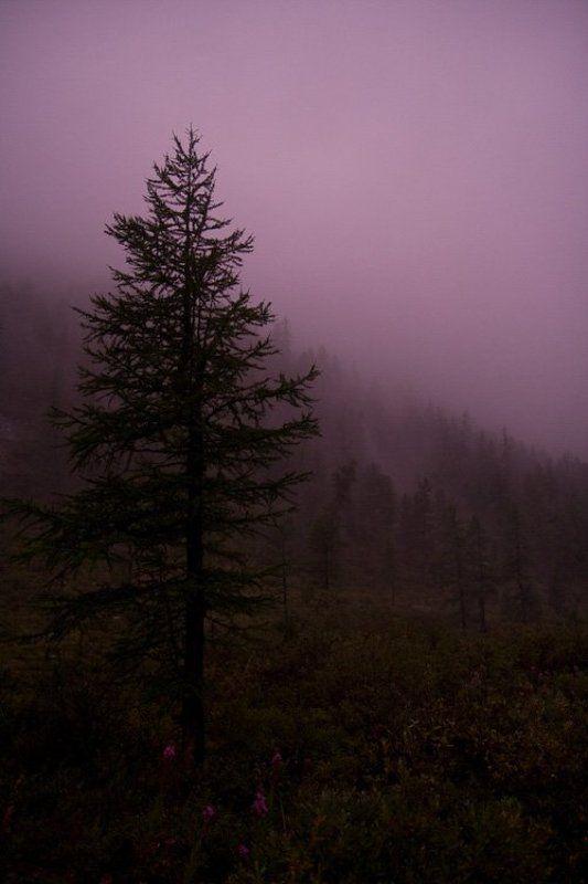 алтай, туман Magenta. No correctionphoto preview